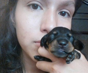 dachshund, girl, and puppy image