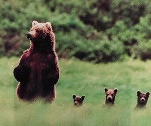 adorable, brave, and cubs image