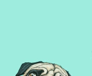 dog, wallpaper, and pug image