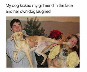 funny, dog, and humor image