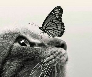 cat, butterfly, and animals image