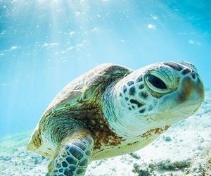animals, ocean, and summer vibes image