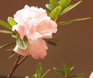 flower flores pink rosa image