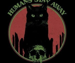 cat, black, and humans image