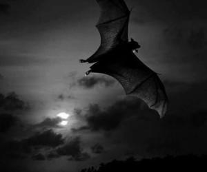 bat, animal, and sky image