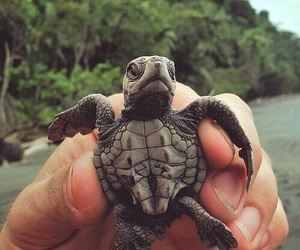 animal, turtle, and beach image