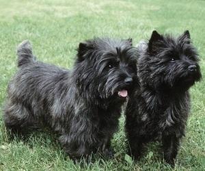black, dog, and little image