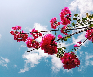 blue skies, clouds, and flowers image