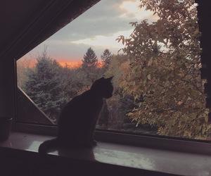 autumn, cat, and november image