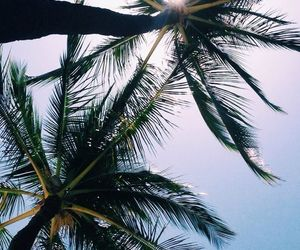 wallpaper, palms, and places image