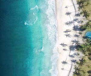 beach, green, and palm trees image