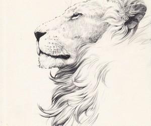 lion, tattoo, and profile image