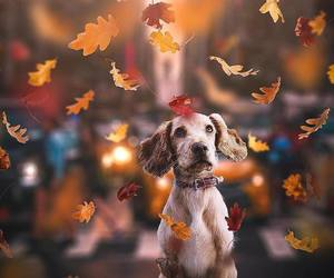 dog, leaves, and fall image