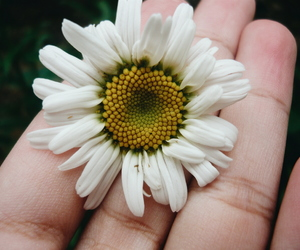 aesthetic, clean, and daisy image