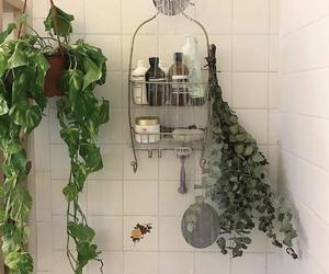 plants, shower, and bathroom image