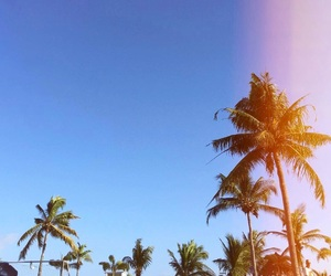 amazing, pacific, and palm trees image