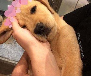 dog, doggy, and perrito image