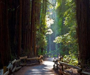 nature, paradise, and trees image
