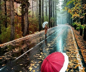 autumn, november, and rainy image