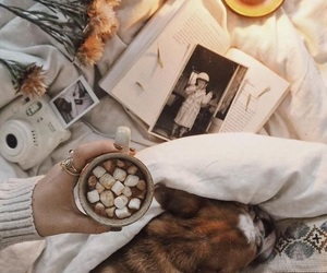 fall, dog, and cozy image