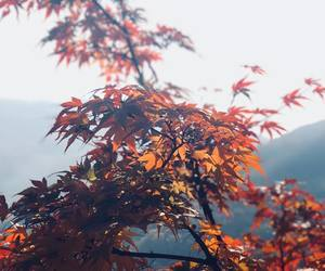 autumn, forest, and korea image