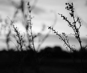 blackandwhite and photography image