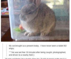 funny, tumblr, and bunny image