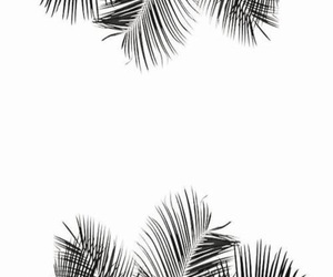 black, palm trees, and palms image