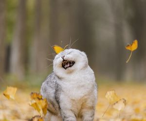 animals, autumn, and cats image