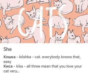 animal, cats, and haha image