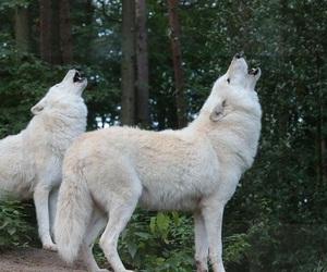goddess, Howl, and werewolf image