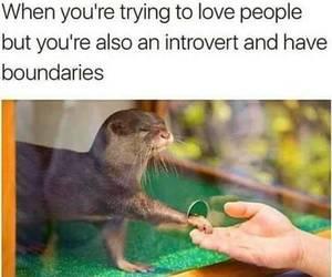 funny and introvert image