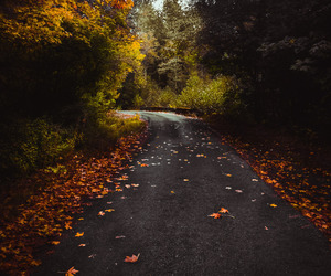 autumn, colors, and fall colors image