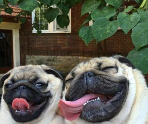 dog, pug, and animals image