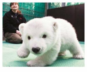 Polar Bear, adorable, and baby image