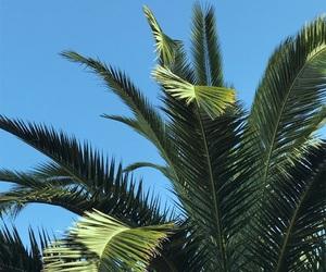 green, palm, and palmera image
