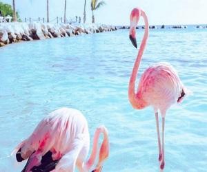 flamingo, sea, and pink image