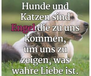angel, deutsch, and kitty image