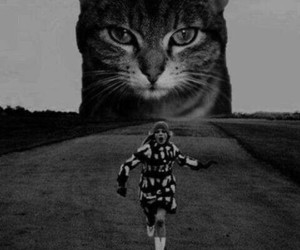 cat, black and white, and run image