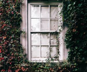 architecture, photography, and window image