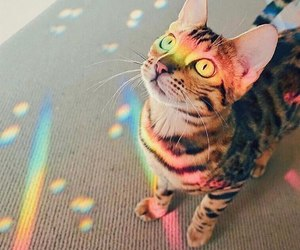 cat, colour, and rainbow image