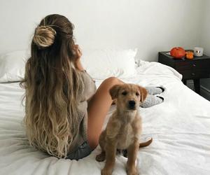 dog and hair image