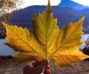 fall autumn nature image