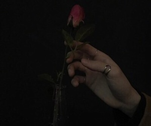 aesthetic, rose, and black image