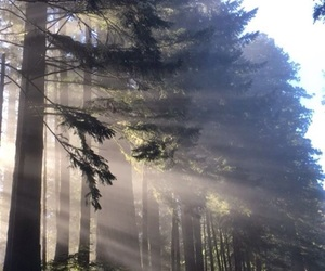 nature, light, and trees image