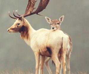 animal, autumn, and dear image