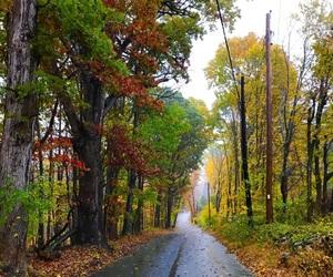 adventure, autumn, and beautiful image
