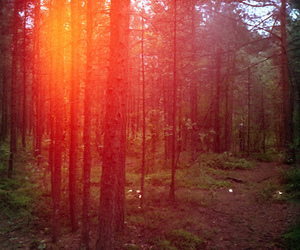 forest, light, and red image