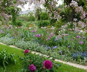 flowers, garden, and purple flowers image