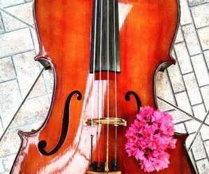 cello and flores image